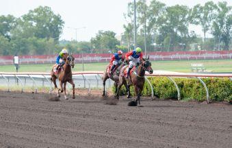 Race 1 Taciturn