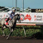 Race 6 Ash Grey